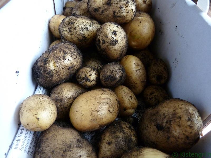 In Kartoffelgräberstimmung