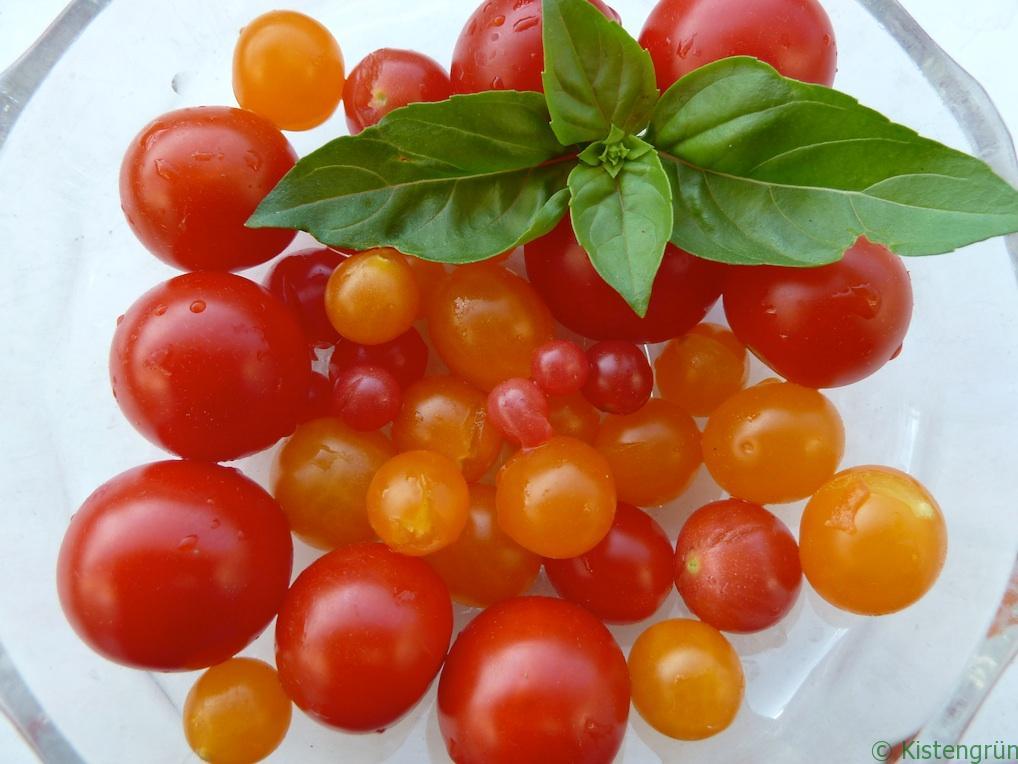 Klassisches Duo: Tomate und Basilikum.