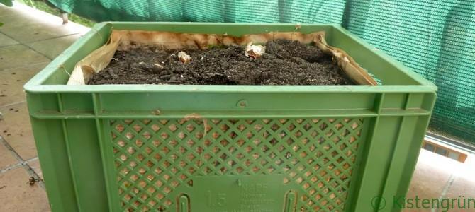 Kräuter und Gemüse anbauen ab August