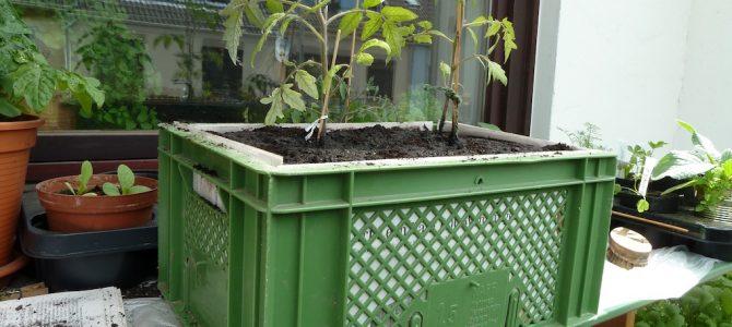 Anleitung zum Kisten bepflanzen