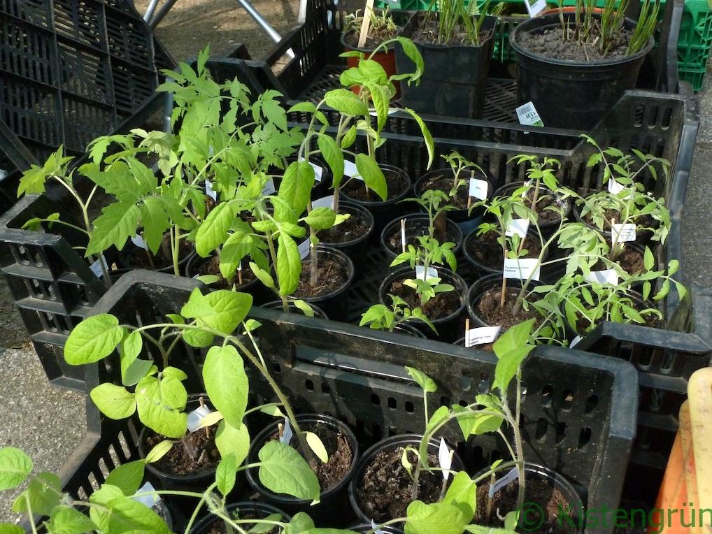 Auf einem Pflanzenmarkt: Kistenweise Tomaten und Paprika.