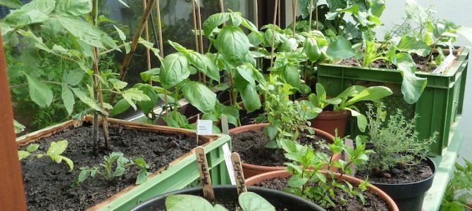 Auf gute Nachbarschaft! Mischkultur im Balkongarten