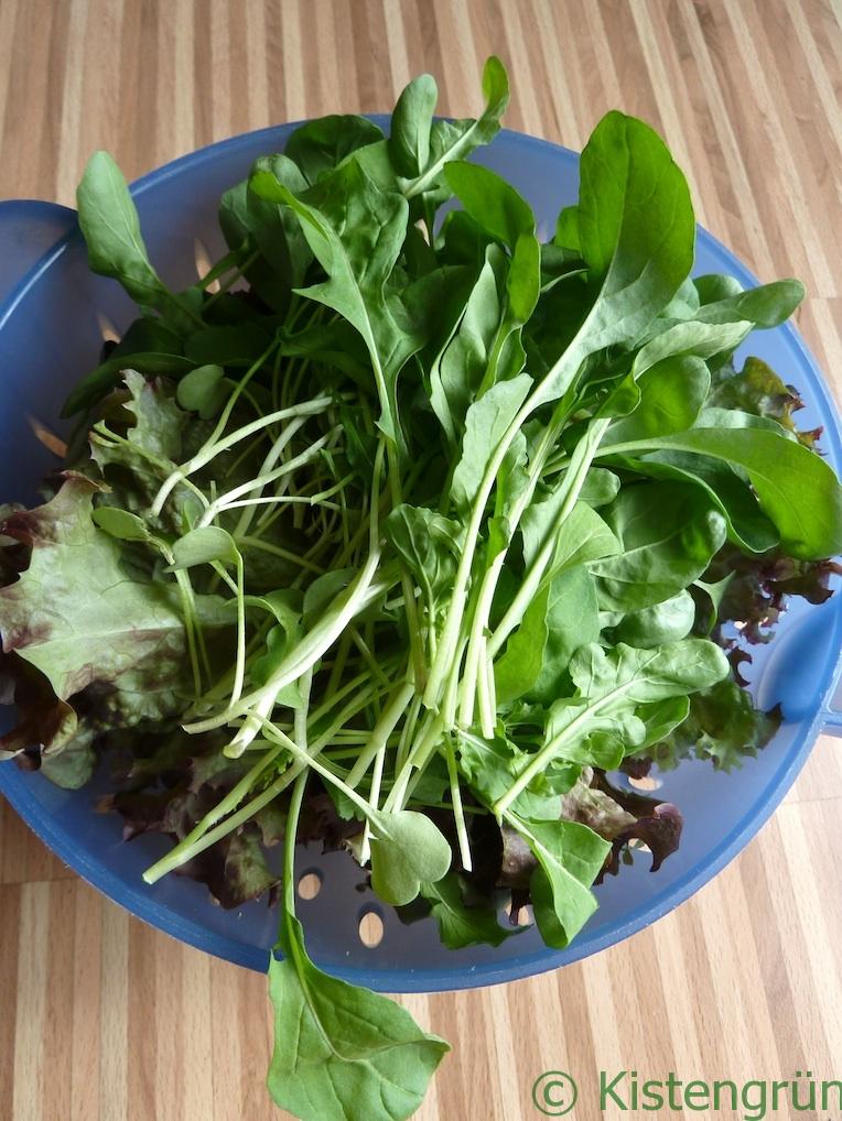 Frischer Salat aus dem Balkongarten. :-)
