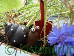 Eine braune Porzellanschnecke in einem Blumenkasten mit einer roten Schaufel.