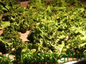 Grünkohl-Chips: Grünkohl auf einem mit Backpapier ausgelegtem Blech im Backofen gedörrt.