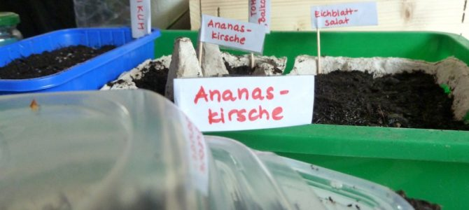 Von kleinen Samen und (wahrscheinlich mal wieder viel zu) großen Gartenplänen