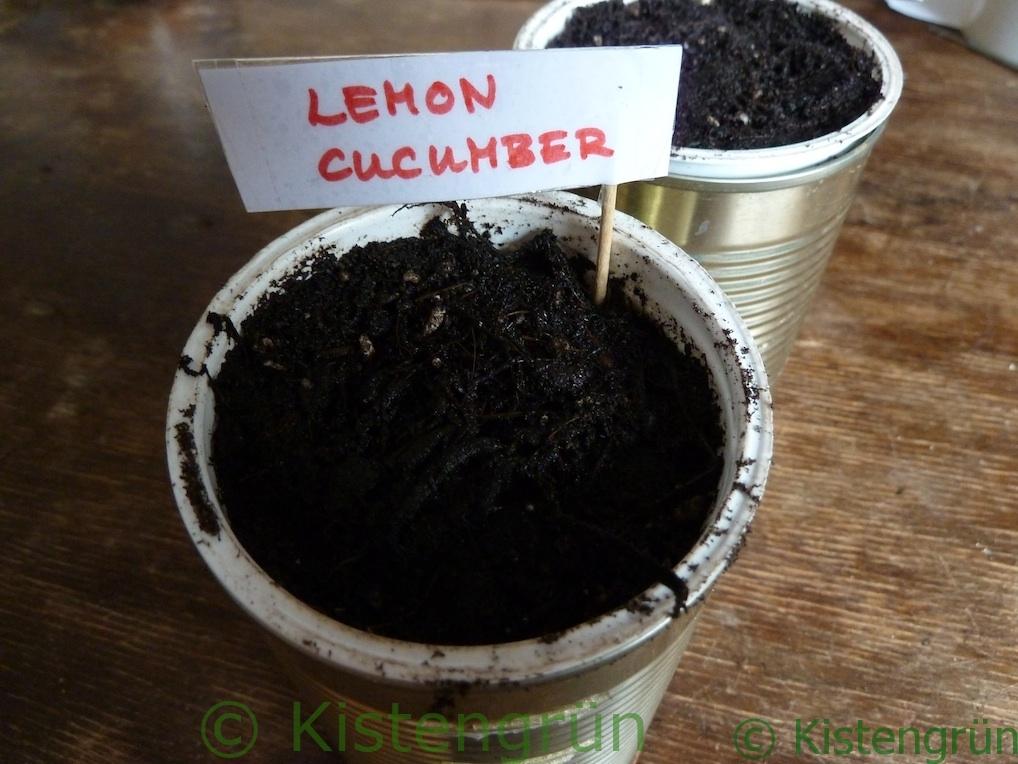 Ein Mini-Blumentopf: Ein Joghurtbecher in einer KOnservendose, gefüllt mir ERde un einem Schild, auf dem Lemon Cucumer steht