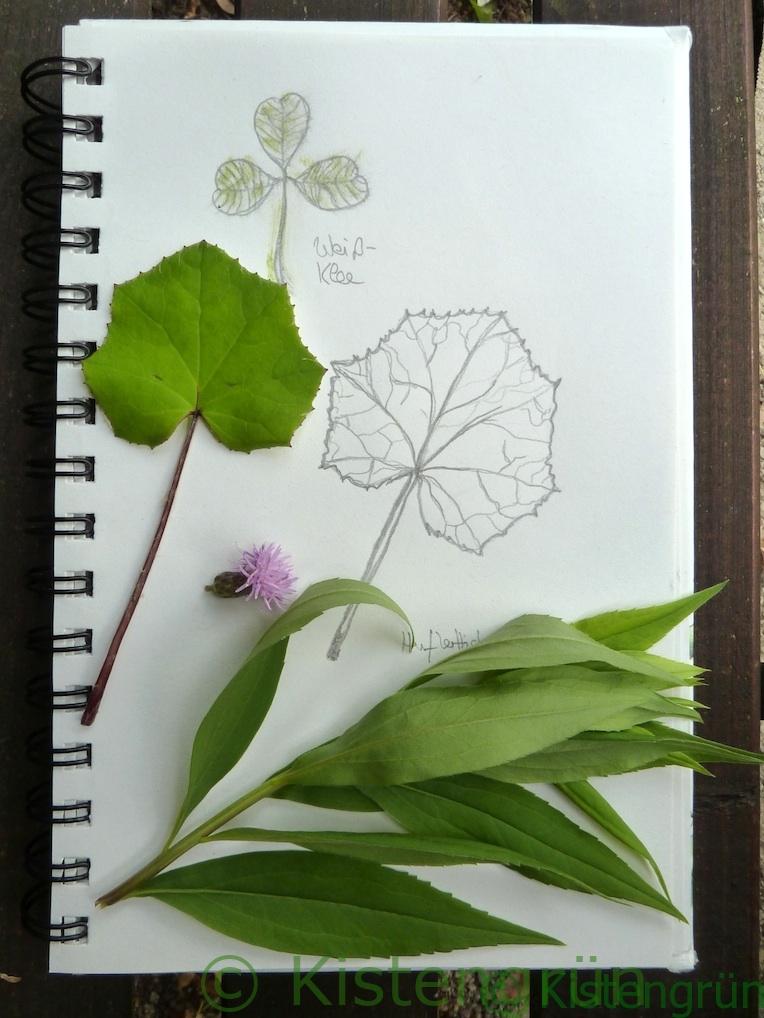 Gezeichnete Blätter von pflnzen und die Pflanzen daneben