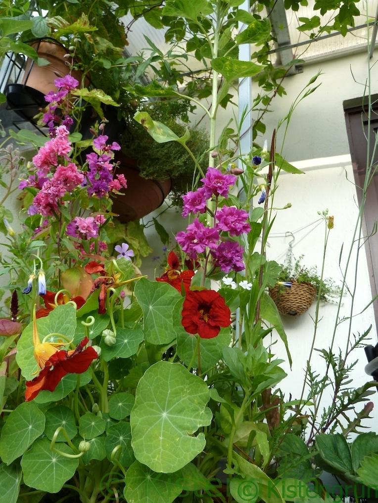 ein Blumenkasten mit vielen blühenden Blumen auf dem Balkon