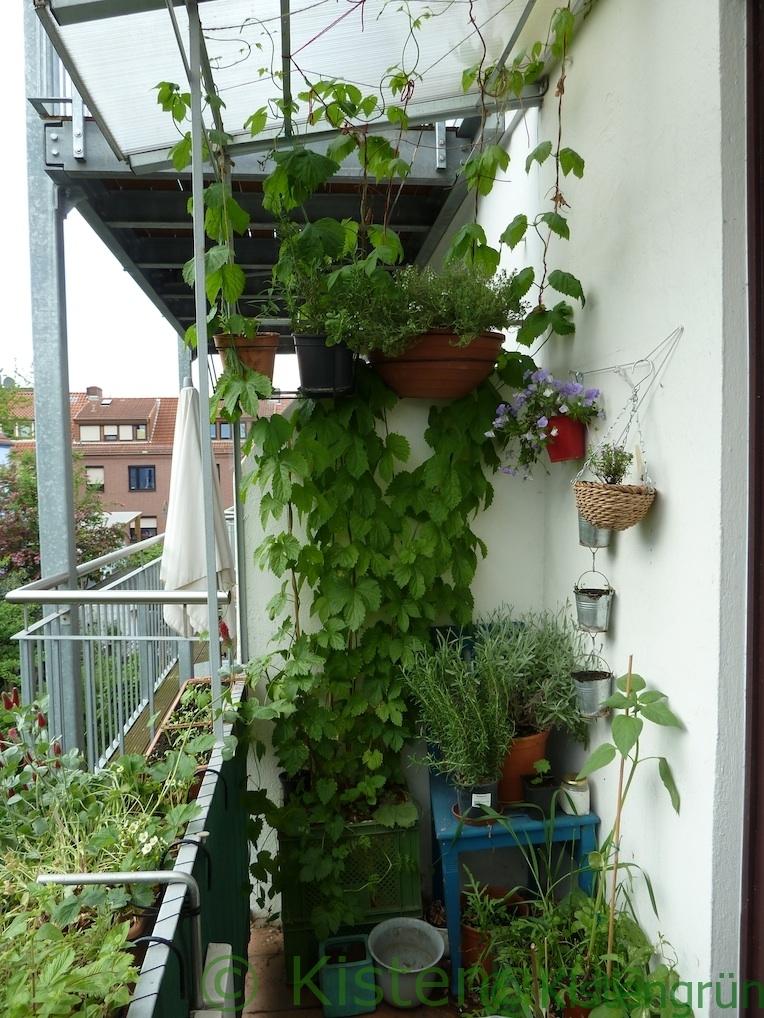 Balkonbegrünung mit Hopfen
