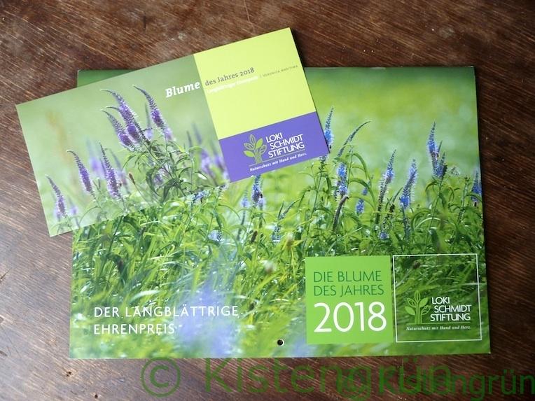 Kalender und Grußpostkarte mit der Blume des Jahres 2018: Langblättriger Ehrenpreis