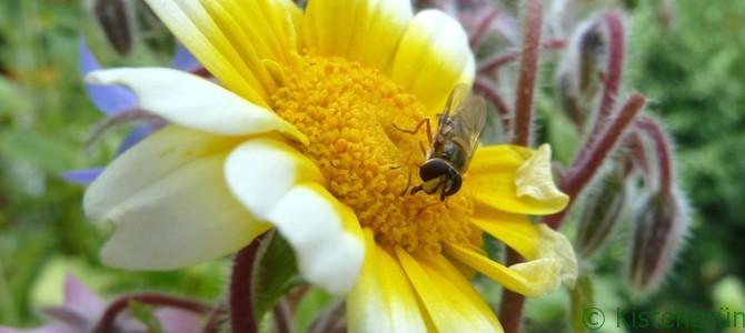 Blüten, Hummeln und ein Monster