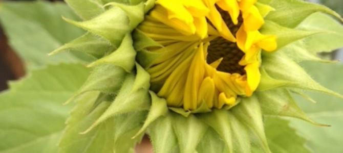Eure Beiträge zur Blogparade #Blütenzauber