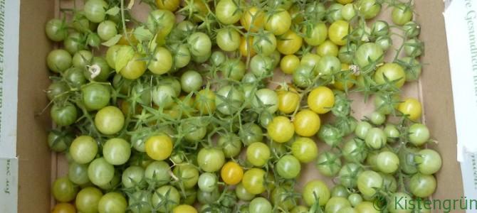 Grüne Tomaten nachreifen lassen