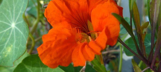 Spätsommerliches Farbenspiel im Balkongarten