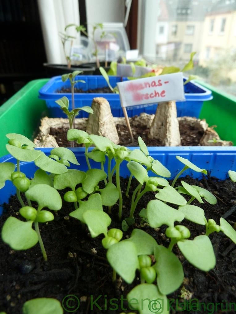 Erfolgreiche Anzucht von Kräutern und Gemüse auf der Fensterbank