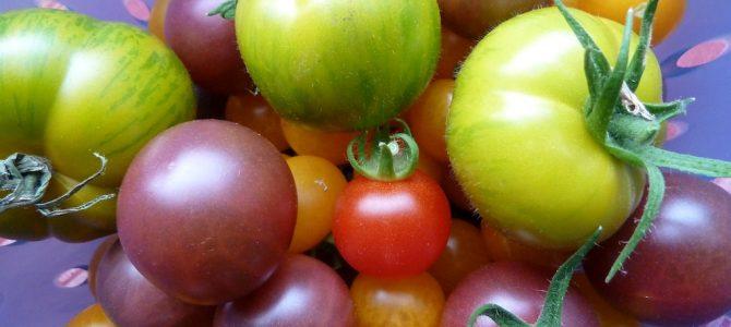 Tomaten: Von wegen nur rund und rot