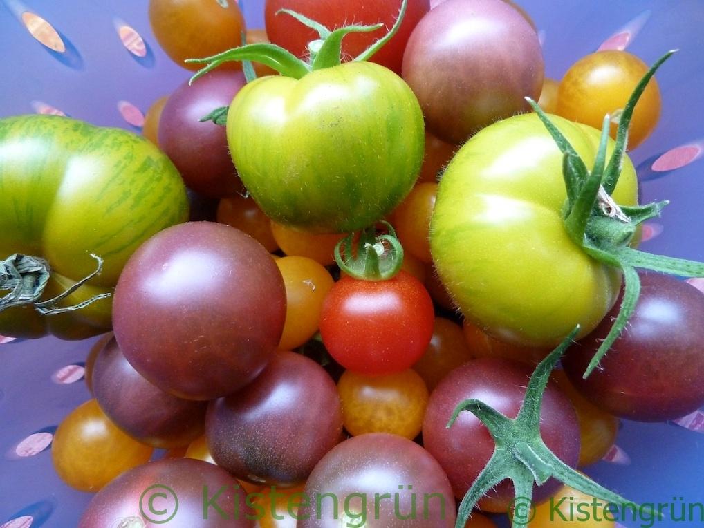 Verschiedene Tomatensorten in einem blauen Sieb