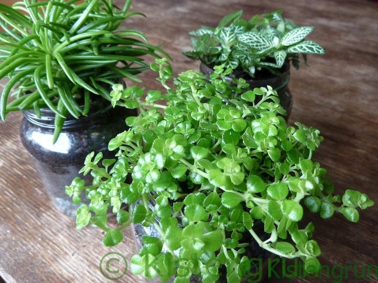 Zimmerpflanzen im Glas
