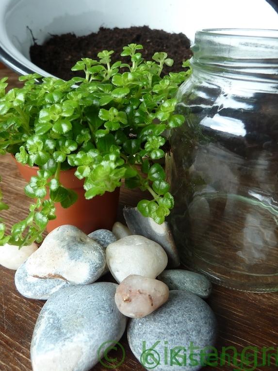 Zimmerpflanzen im Glas: Material