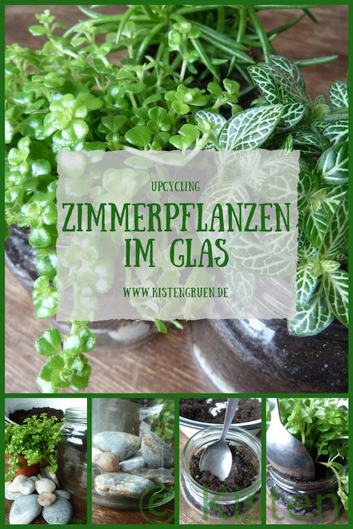selber machen zimmerpflanzen im glas pflanzen. Black Bedroom Furniture Sets. Home Design Ideas