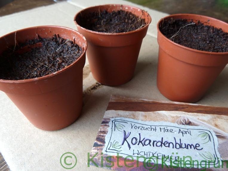 Pflanztöpfe und die Samentüte mit Saatgut Kokardenblume
