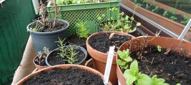 Diese Kräuter und Gemüse-Sorten wachsen im Balkon-Garten 2018