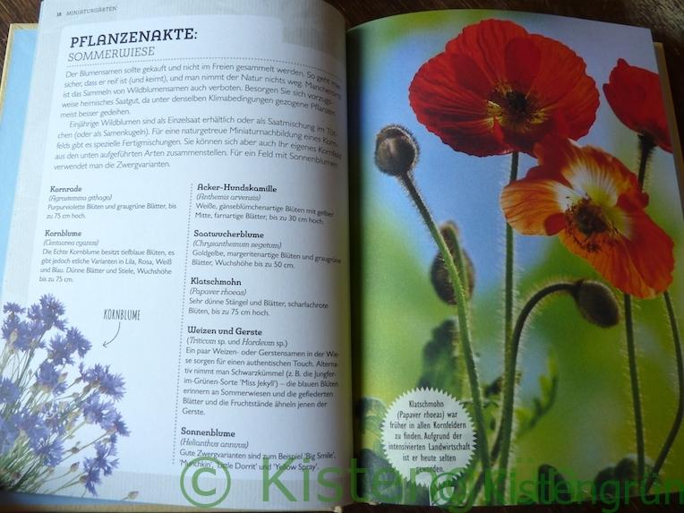 Aus Holly Farrell's Buch Miniaturgärten: Pflanzenakte