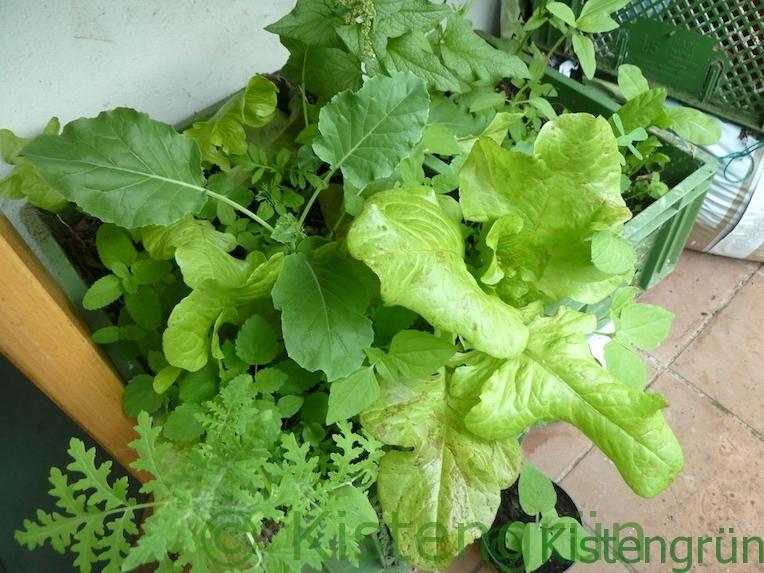Kisten mit Salat, Kohlrabi, Guter Heinrich und Zitronenmelisse