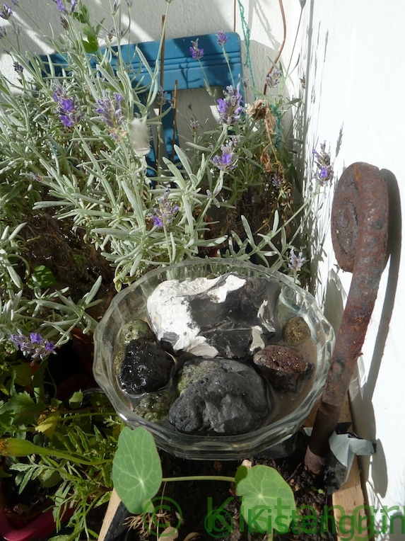 Insektentränke neben Lavendel auf dem Balkon