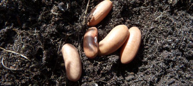 Sommer-Aussaat: Diese Gemüse, Kräuter und Blumen kannst du jetzt säen
