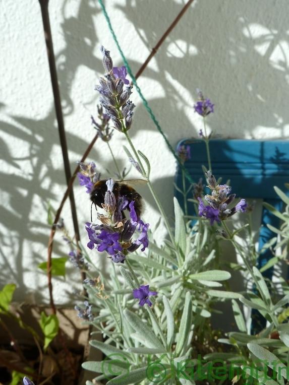 wasserstelle f r durstige insekten bienentr nke selber bauen. Black Bedroom Furniture Sets. Home Design Ideas