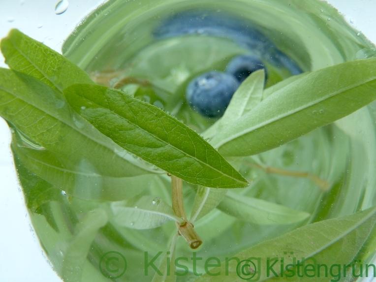 Infused Water: Wasser mit Zitronenverbene und Blaubeeren
