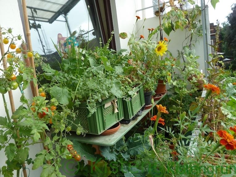 Kisten in einem Balkon-Garten