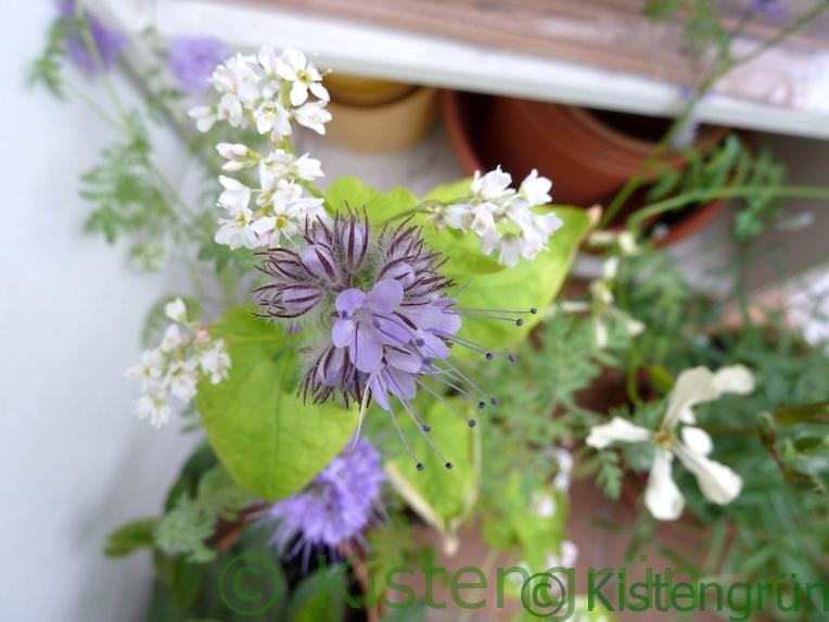 Diese Bienenweiden Bluhen In Spatsommer Und Herbst Auf Dem Balkon