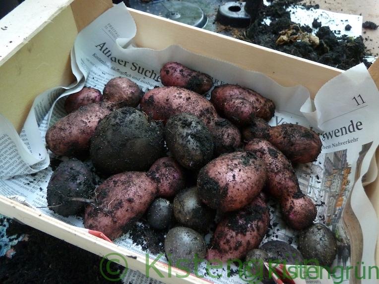 Bunte Kartoffeln in einer kleinen Kiste