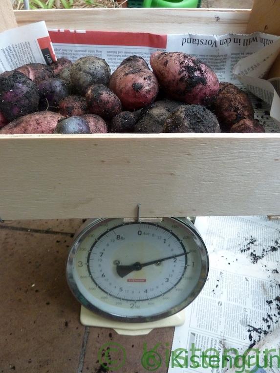 Eine Kiste mit bunten Kartoffeln auf einer Küchenwaage