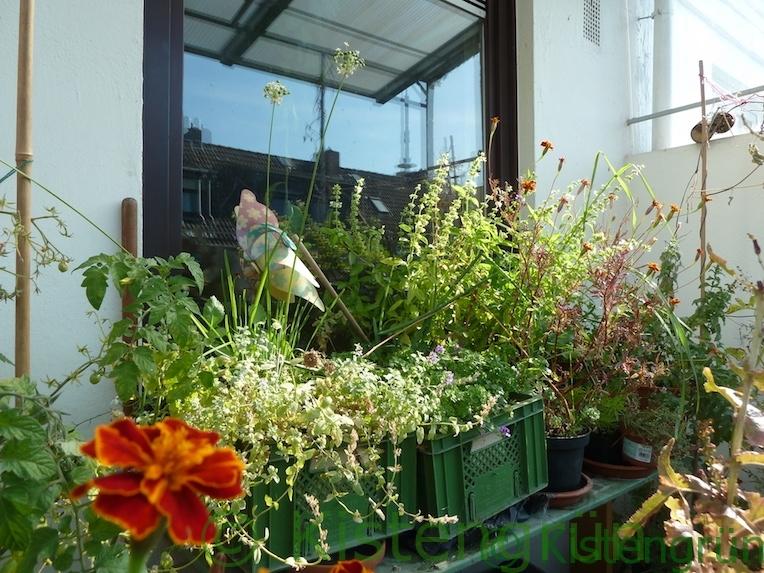 Pflanzen in einer Kiste auf einem Balkon