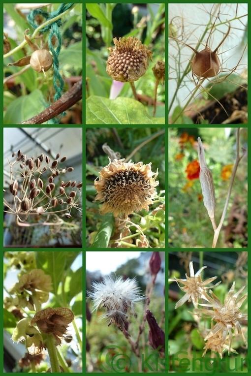 Pflanzen-Quiz: Samenstände