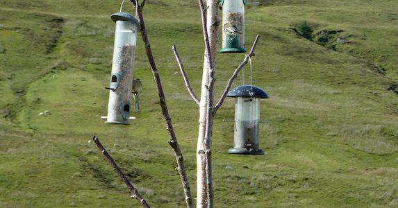 Vögel füttern im Winter: Tipps für Futter, Futterhaus und Futterlagerung
