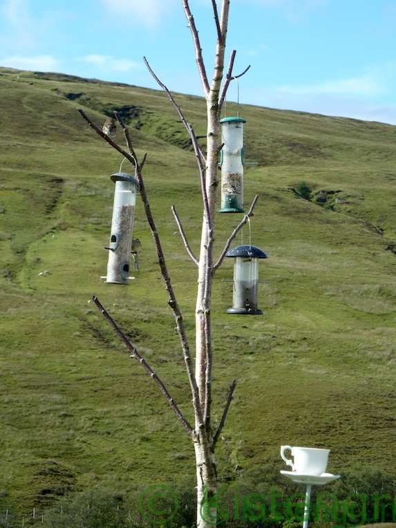 Futtersilo für Vögel