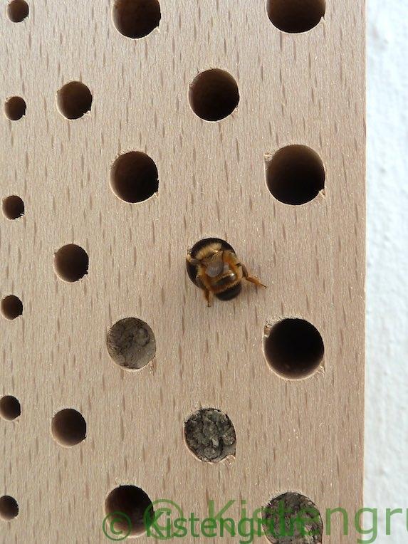 Nisthilfe mit Mauerbiene