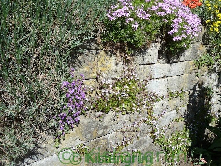 Eine Trockenmauer im Botanischen Garten Bielefeld