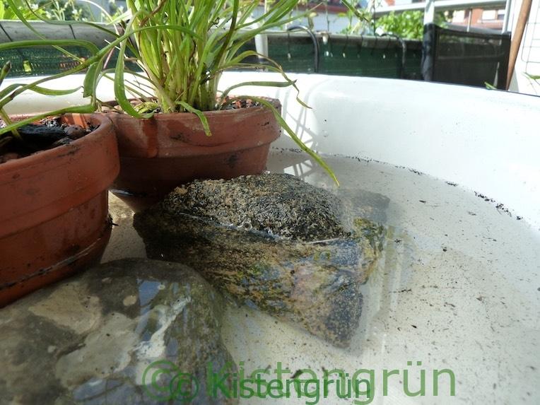 Steine in einem Mini-Teich in einer Schüssel
