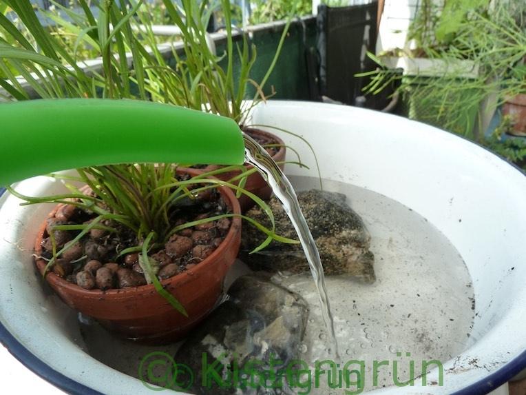 Wasser mit einer Gießkanne in einen Mini-Teich füllen