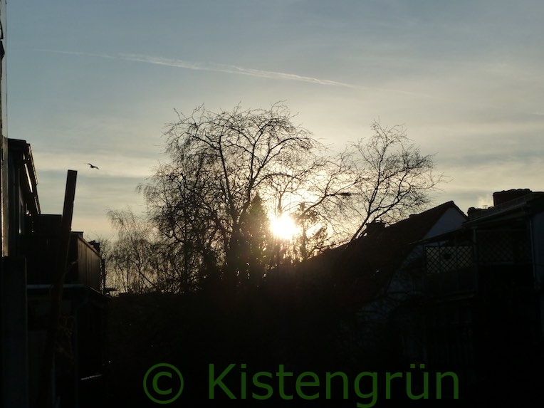 Wintersonne Januar hinter Bäumen