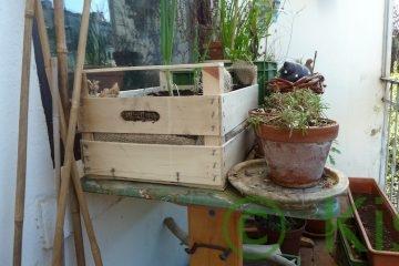 Plastikfrei gärtnern - Holzkiste und Terracotta-Topf auf dem Balkon