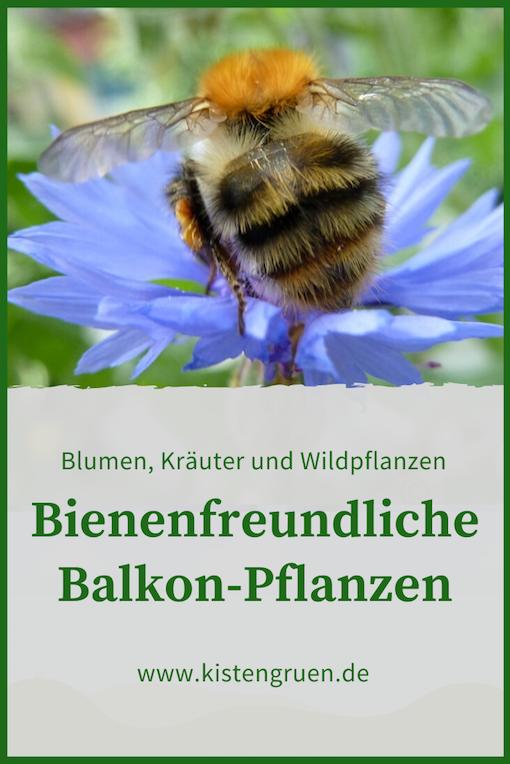Bienenfreundliche Balkonpflanzen Kistengruen