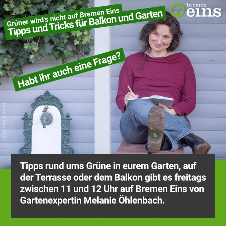 Gartensendung Radio Bremen Eins Grüner wird's nicht Gartenexpertin Melanie Öhlenbach Foto Jörg Sarbach