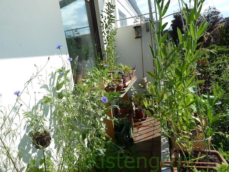 Balkon-Garten 2020
